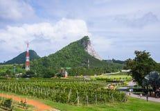Landschaft des Weinbergs Lizenzfreie Stockfotografie