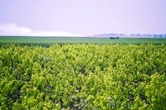 Landschaft des Weinbergs Stockfoto
