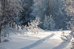 Landschaft des Winterholzes Lizenzfreie Stockfotos