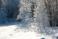 Landschaft des Winterholzes Stockbilder