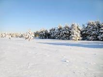Landschaft des Winters lizenzfreies stockfoto