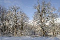 Landschaft des Winterwaldes Stockbilder