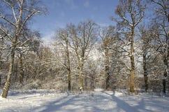 Landschaft des Winterwaldes Stockfoto