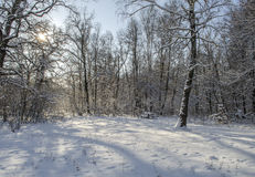 Landschaft des Winterwaldes Stockfotos