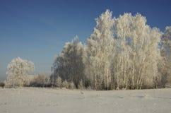 Landschaft des Winterwaldes an einem eisigen sonnigen Tag Stockfotos