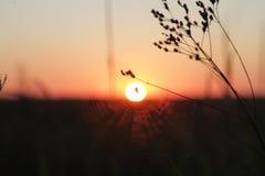 landschaft Die Sonnenaufgänge auf wildem See und wird in der großen Wolke versteckt Schattenbilder eines Grases und des Stocks Di Stockfoto