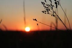 landschaft Die Sonnenaufgänge auf wildem See und wird in der großen Wolke versteckt Schattenbilder eines Grases und des Stocks Di Lizenzfreie Stockbilder