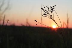 landschaft Die Sonnenaufgänge auf wildem See und wird in der großen Wolke versteckt Schattenbilder eines Grases und des Stocks Di Stockbild