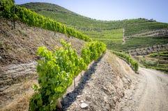 Landschaft in Duero-Tal Stockfotos