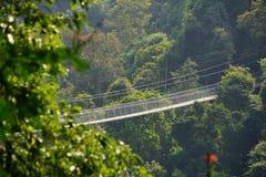 Landschaft in einem Wald mit einer Hängebrücke stockbild
