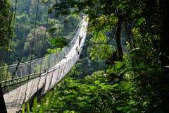 Landschaft in einem Wald mit einer Hängebrücke lizenzfreies stockbild