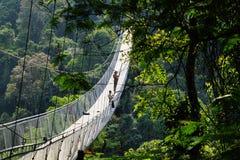 Landschaft in einem Wald mit einer Hängebrücke lizenzfreie stockfotografie