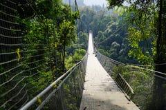 Landschaft in einem Wald mit einer Hängebrücke stockfoto
