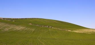 Landschaft einer Wiese Stockfotografie