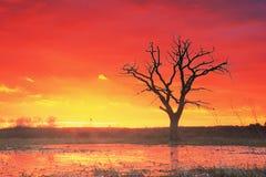 Landschaft eines alten Baums gegen eine glühende Sonnenuntergangsonne Lizenzfreies Stockbild