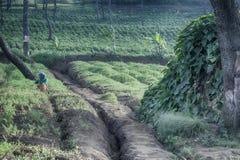 Landschaft eines Dorfs mit Gemüsefeldern stockfotografie