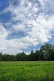 Landschaft eines grünen Feldes mit Bäumen Stockfoto