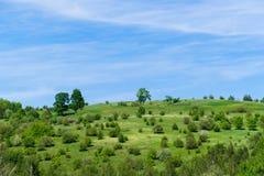 Landschaft eines grünen Feldes mit Bäumen und dem Schwimmen bewölkt sich Lizenzfreies Stockfoto
