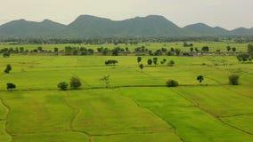 Landschaft eines grünen Reisreisfelds Kanchanaburi-Provinz, Thailand stock video footage