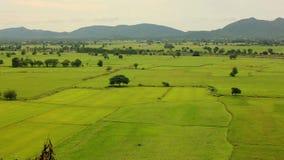 Landschaft eines grünen Reisreisfelds Kanchanaburi-Provinz, Thailand stock footage