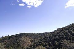 Landschaft eines Kieferwaldes auf dem Berg Stockbilder