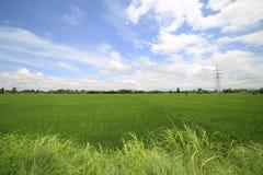 Landschaft eines ruhigen Reisfeldes auf Wolken und Himmelhintergrund Lizenzfreie Stockbilder
