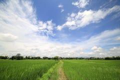 Landschaft eines ruhigen Reisfeldes auf Wolken und Himmelhintergrund Lizenzfreies Stockfoto