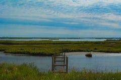 Landschaft eines Sumpfes Stockbilder