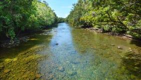 Landschaft eines wilden Stromes in Nationalpark Queensland Daintree Lizenzfreie Stockbilder