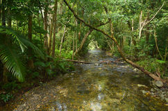 Landschaft eines wilden Stromes in Nationalpark Queensland Daintree Lizenzfreie Stockbilder