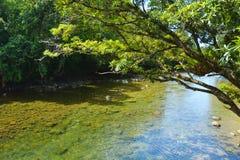 Landschaft eines wilden Stromes in Nationalpark Queensland Daintree Stockbild