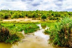 Landschaft entlang dem Olifants-Fluss nahe Nationalpark Kruger in Südafrika stockfotos