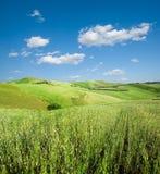 Landschaft für grünen Hügel des Weizens Stockfotografie