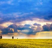 Landschaft - Feld der gelben Blumen und des bewölkten Himmels Lizenzfreies Stockbild