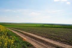 landschaft Feld Fangen Sie Straße auf Blauer Himmel des grünen Grases bewölkt sich im Himmel lizenzfreie stockfotografie