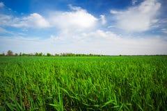 Landschaft gemacht in der Tageszeit Schöner bewölkter Himmel Stockbilder