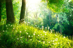 Landschaft. Grünes Gras und Bäume Lizenzfreies Stockbild