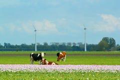 Landschaft in Holland Stockfotografie
