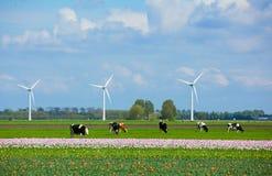 Landschaft in Holland Lizenzfreies Stockfoto