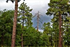 Landschaft am Holz-Canyon See, Coconino County, Arizona, Vereinigte Staaten Lizenzfreies Stockfoto