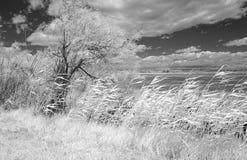 Landschaft im Camargue Stockfoto