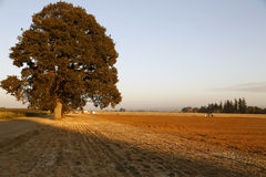 Landschaft im Fall Lizenzfreies Stockbild