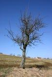 Landschaft im Frühjahr Lizenzfreies Stockfoto