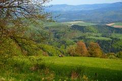 Landschaft im Frühjahr Stockbild
