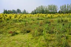Landschaft im fruchtbaren Sommergrün Stockfoto