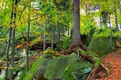 Landschaft im Holz lizenzfreies stockbild