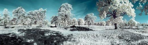 Landschaft im Infrarot Lizenzfreies Stockfoto