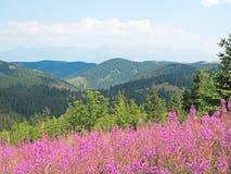Landschaft im niedrigen Tatras Lizenzfreies Stockbild