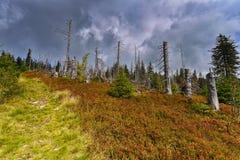Landschaft im Norden lizenzfreie stockfotos