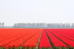 Landschaft im Polder Lizenzfreies Stockfoto